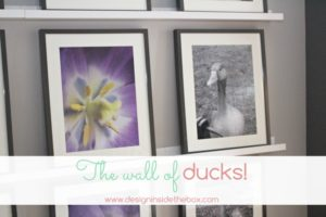 Welcome to our wall of ducks!